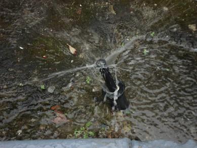 clogged-sprinkler-heads