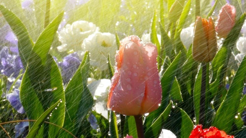 sprinkler systems repair in san antonio gardens and lawns