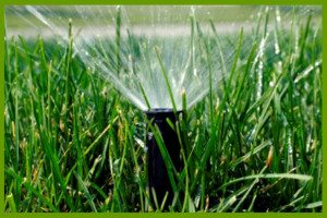 irrigation and sprinkler installation