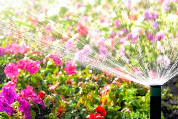 sprinkler for lawn san antonio
